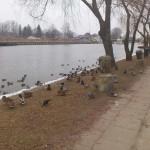 Hydrolodzy ostrzegają przed wysokim stanem wód w powiatach elbląskim i braniewskim