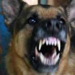 Trzy psy dotkliwie pogryzły 18-latkę
