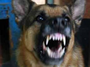 groźny pies, fot. RO