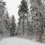 Liczą wilki i rysie w lasach