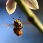 Pszczele problemy oznaczają coraz mniej miodu