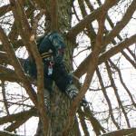 Zbiór zrazów z drzew pomnikowych