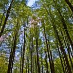 Po nocnych opadach deszczu poprawiła się sytuacja w lasach Warmii i Mazur