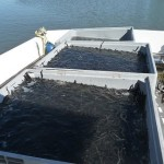 Czysta i ciepła woda to problem dla rybaków
