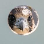 Cyfrowa kartoteka ptaków Warmii i Mazur