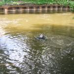 W rzece Ełk utonął 31-latek