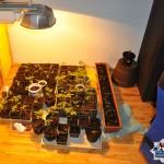 Mieli w domu około 100 sadzonek