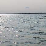 """Sinice w jeziorze Śniardwy. Turyści skarżą się na """"zupowatą wodę"""", sanepid przestrzega: lepiej unikać tam kąpieli"""