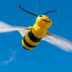 Pszczelarze poszerzają wiedzę