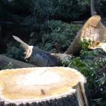 Zginął podczas wycinki drzew