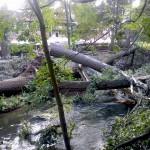 W parku nad Łyną trwa usuwanie powalonych drzew