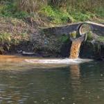 Prezes zakładu mleczarskiego w Lidzbarku Warmińskim usłyszał zarzuty zanieczyszczenia rzeki Łyny