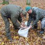 Leśnicy rozpoczęli zbiór kasztanów dla zwierząt