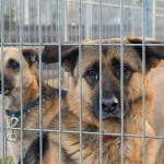 Coraz więcej psów z Tomaryn znajduje właścicieli