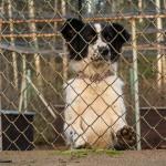 Pomóż bedzomnym psom