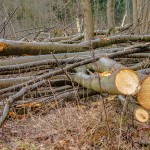 Wycinka lasu na olsztyńskim Pieczewie. Leśnicy tłumaczą: prosili o to mieszkańcy