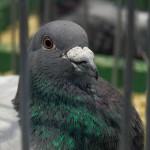 Wiemy, ile jest ptaków na Warmii i Mazurach