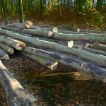 Pieniądze z lasów pójdą na drogi lokalne