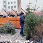 Poświąteczne sprzątanie choinek w Elblągu