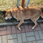 Animals oskarża burmistrza Bisztynka o zaniedbanie