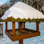Zima za pasem, pamiętajmy o ptakach!
