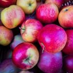 Dzieci z piskich szkół zajadają się jabłkami