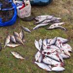Ryby pozostawili w pontonie