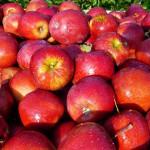 Banki Żywności apelują o przetwarzanie produktów