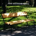 W Olsztyńskim Parku Podzamcze ubędzie drzew
