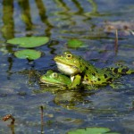 Uczniowie przeprowadzą żaby do wody