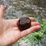 Kamienie, które żyją (hildebrancja rzeczna)