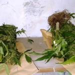 Małżeństwo z Olsztyna uprawiało w domu marihuanę