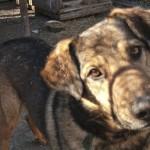 Psy z Pudwąg pilnie szukają domów