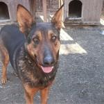 Psy ze schroniska w Pudwągach szukają właścicieli
