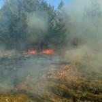 Wypalanie traw zakazane