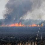 Strażacy walczą z wypalaniem traw