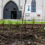 Dęby upamiętnią kanonizację Jana Pawła II
