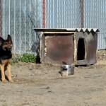 Pies pogryzł 4-latka