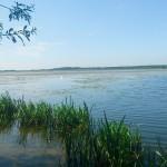 Ponad 400 kg przetworów domowych wrzucono do jeziora Druzno