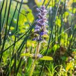 Jak wygrać walkę z wiosenną alergią?