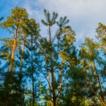 Lasy Państwowe przygotowują się do zmian klimatycznych
