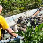 Prokuratura ustaliła winnego zatrucia Jeziora Drużno