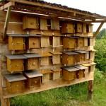 W Kortowie otwarto hotel dla owadów