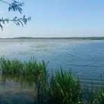 Prokuratura przyjrzy się katastrofie ekologicznej w rezerwacie Drużno