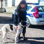 20-latek usłyszał wyrok za znęcanie się nad psem