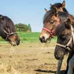 Jak radzi sobie w trudnych czasach Zespół Szkół Rolniczych w Smolajnach?