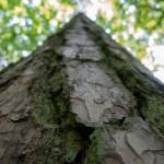 Park Krajobrazowy Wysoczyzny Elbląskiej ratuje nadrzewne gryzonie. Specjalne budki zastąpią naturalne kryjówki