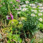 Leczenie przez pracę w ogrodzie i obcowanie z roślinami