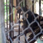Przez 3 lata trzymali psa w klatce