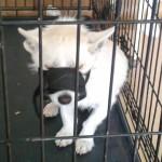 Mieszkaniec Gołdapi wyrzucił psa z 4 piętra